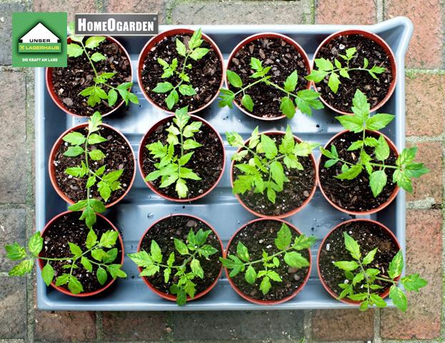 unser lagerhaus blog healthy green und hip. Black Bedroom Furniture Sets. Home Design Ideas